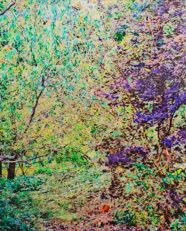 photo of forest in green and purple